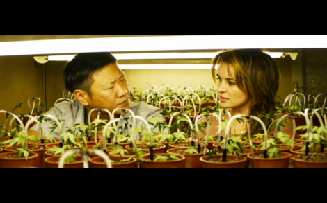 Ce ne sont pas les plants de  marijuana que vous cherchez